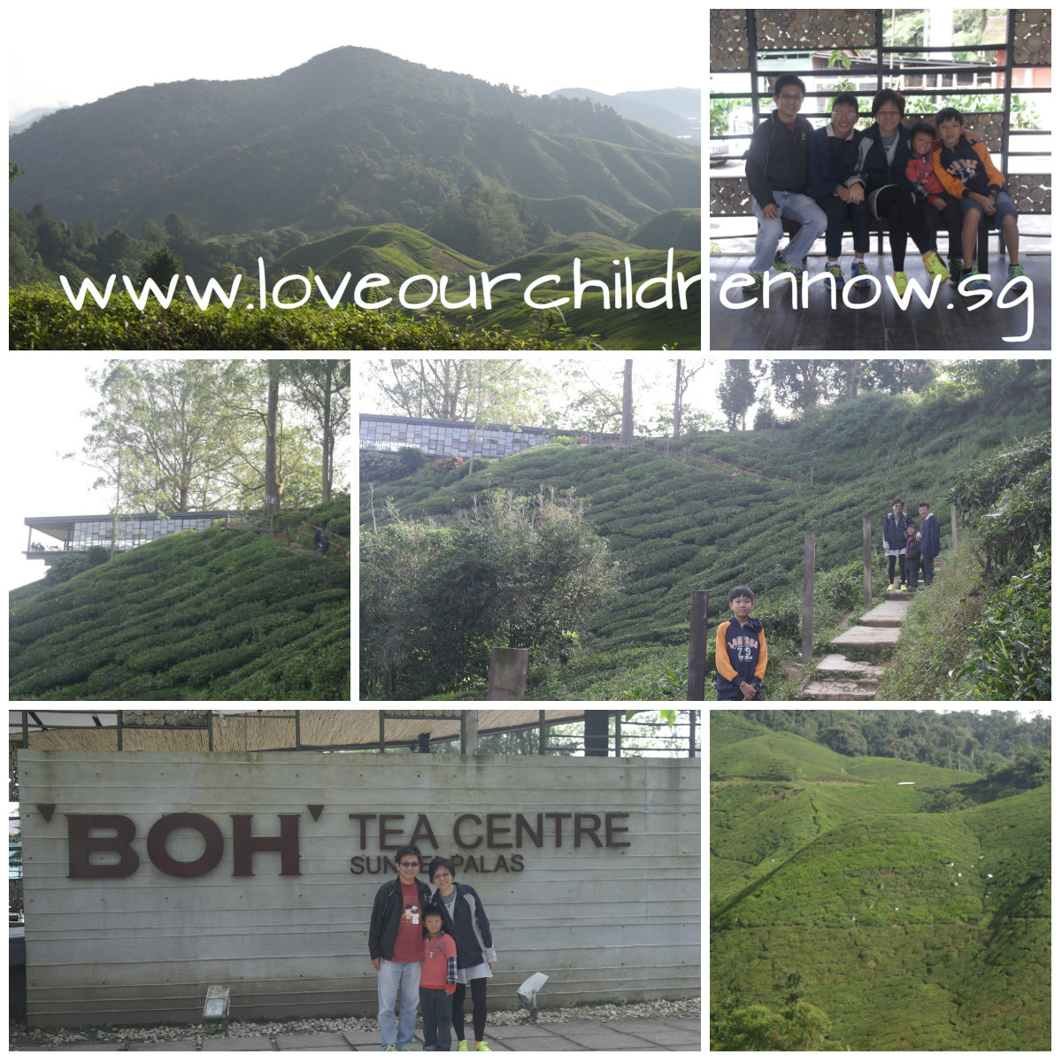 cameon-boh-tea-brinchang-views-people