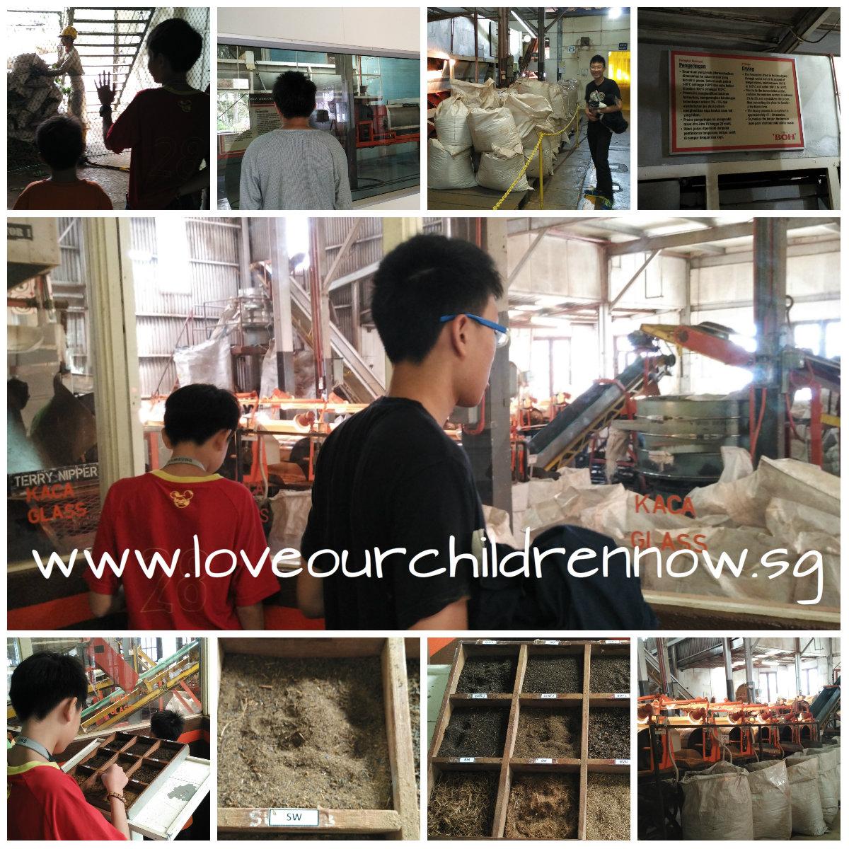 cameron-boh-tea-ringlet-factory